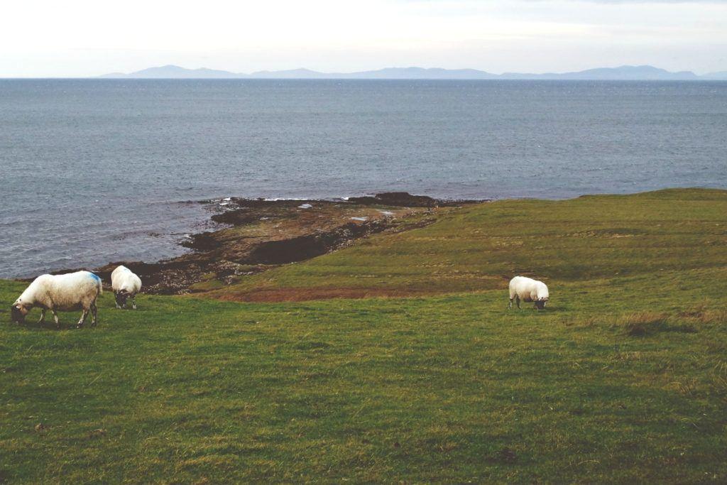 Duntulm, birkák, Külső-Hebridák