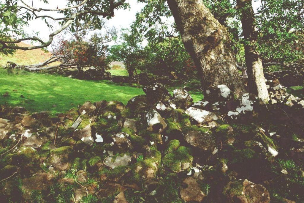 Fairy Glen, park