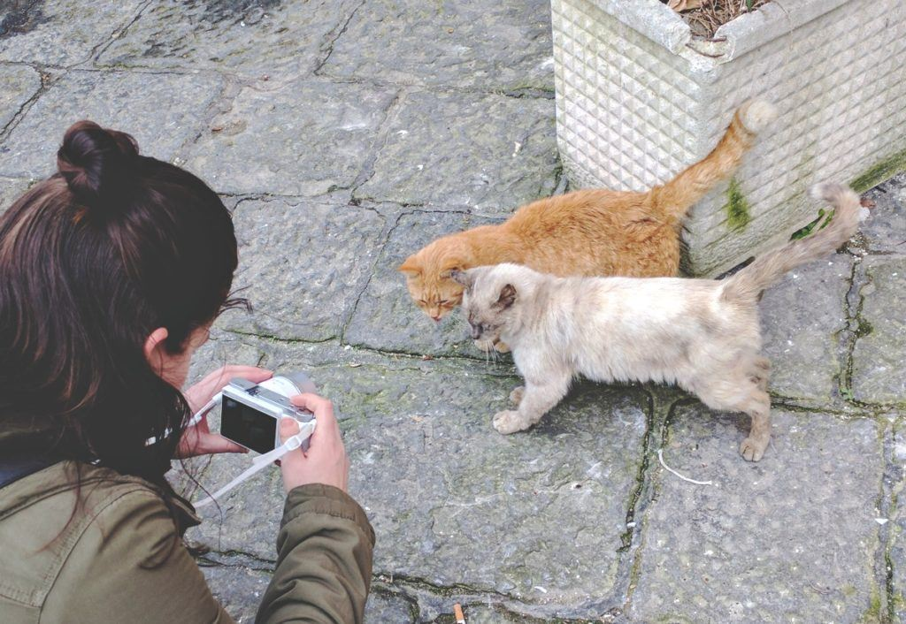 Procida cicák