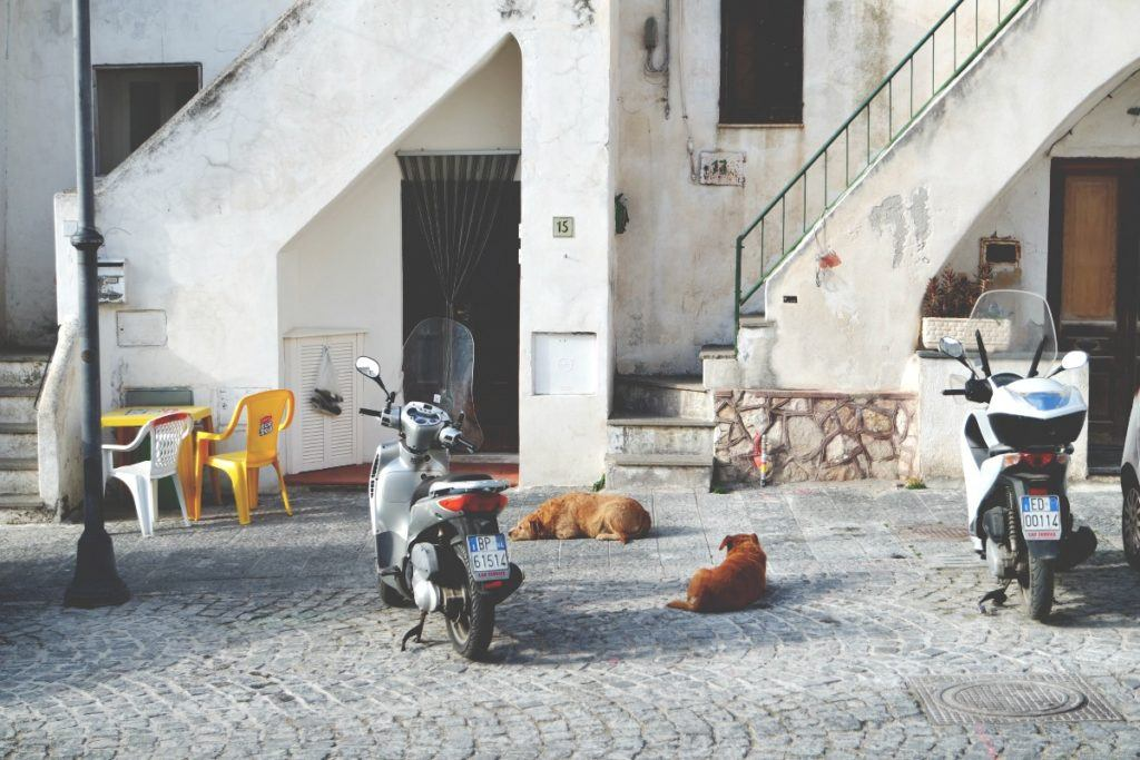 Procida kutyák