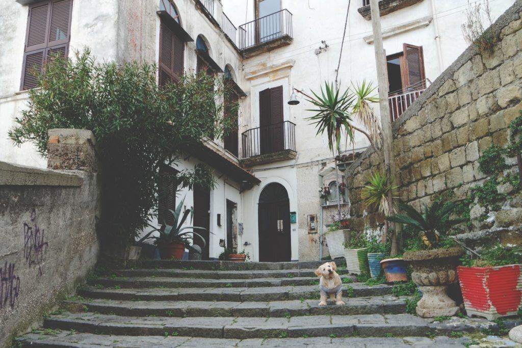 Nápoly, Pedamentino San Martino, kutya