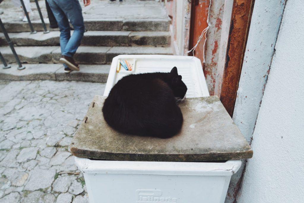 Porto macska