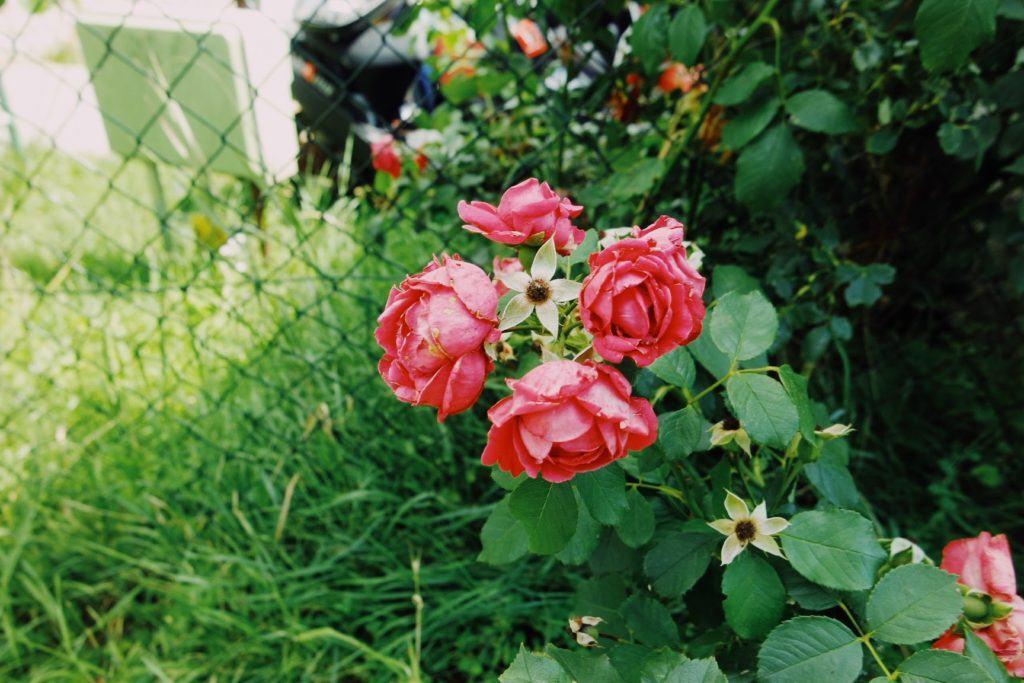 lepkefóbia virág