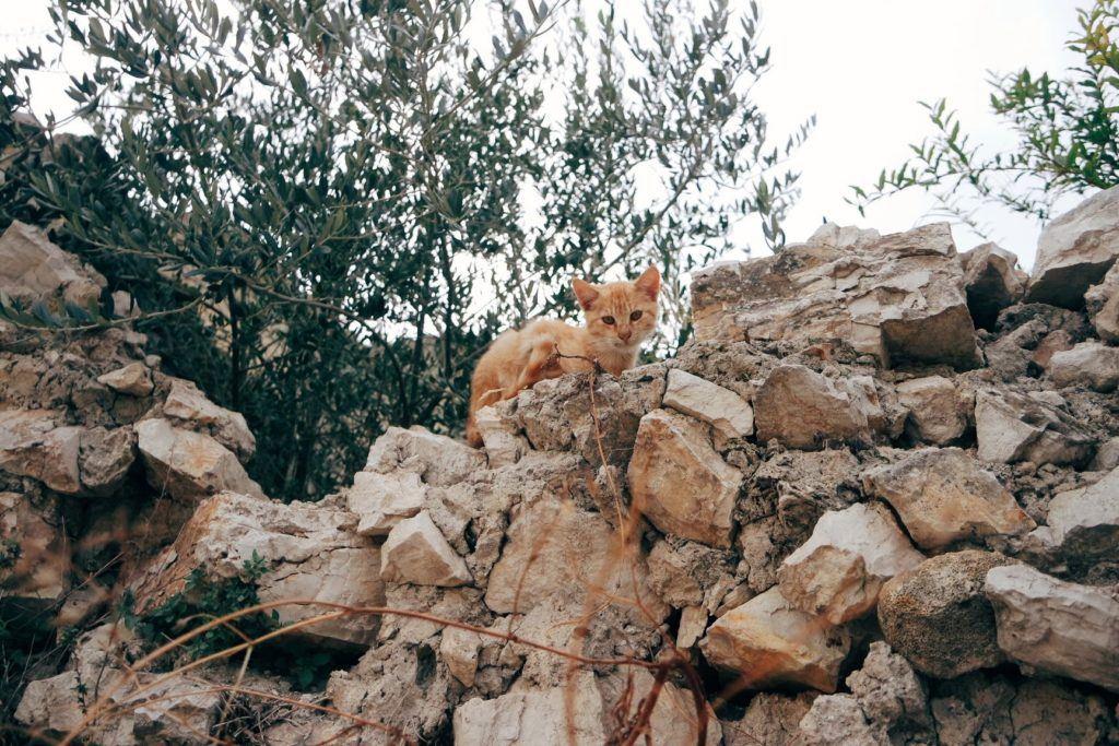 Matera macska