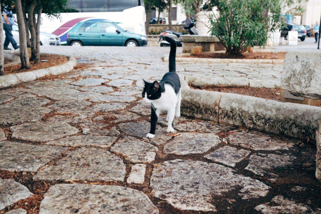 Leuca Puglia